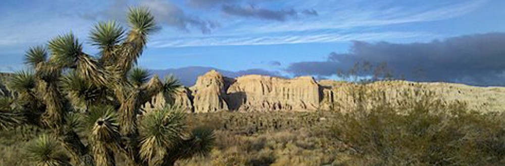 cropped-joshua_tree_header.jpg